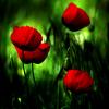 گل ها بوی دروغ و النگو می دهند